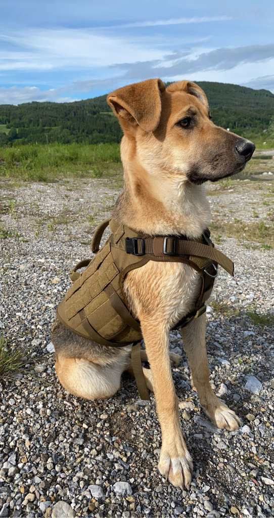Hera, unser Officehund